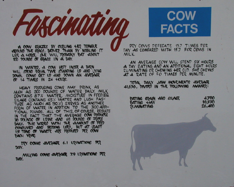 Fascinating Cow Facts
